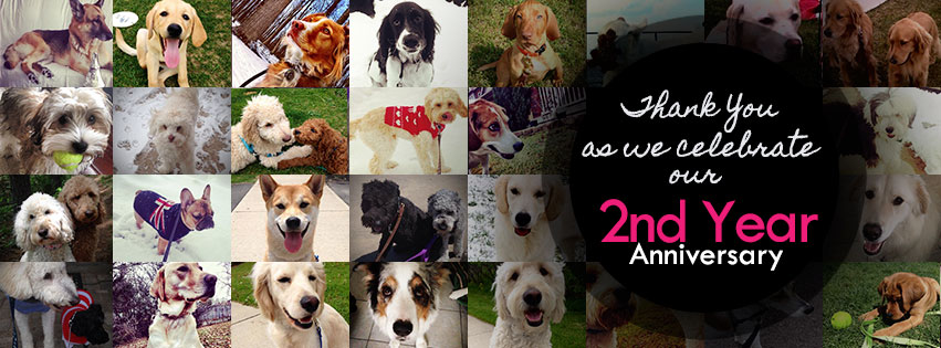 Woof Walking & Co Celebrates 2nd Year In Business