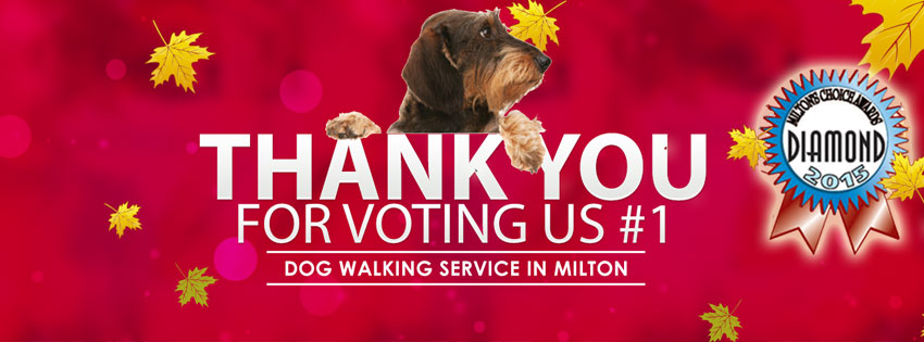 Best Dog Walking Service in Milton 3 Years In A Row