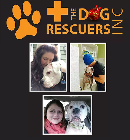A passion for rescuing and re-homing all breeds – The Dog Rescuers Inc