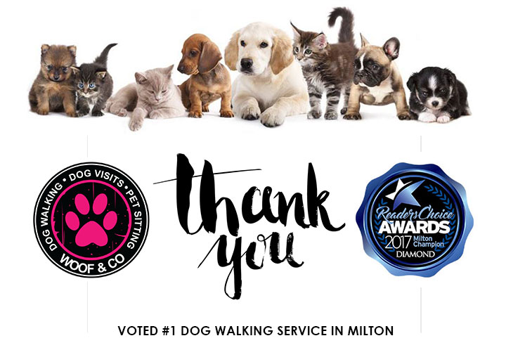 #1 DOG WALKING SERVICE in MILTON for the 5th year in a row