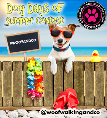DOG DAYS OF SUMMER CONTEST