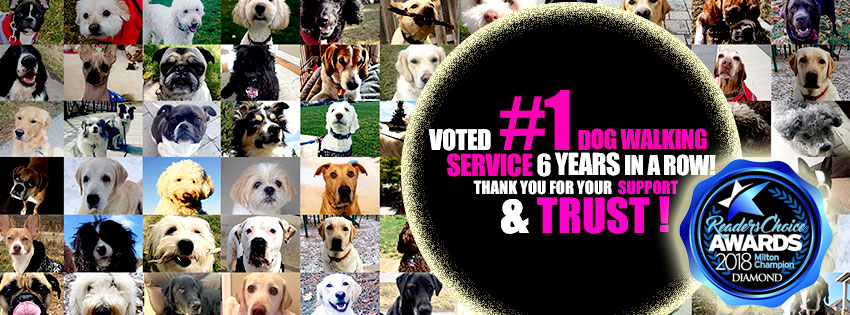 The #1 Dog Walking Service for a 6th year in a row!